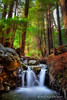Small waterfall in the forest- Big Sur