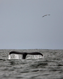 Whale     0004