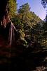 Hocking Hills Ash Cave