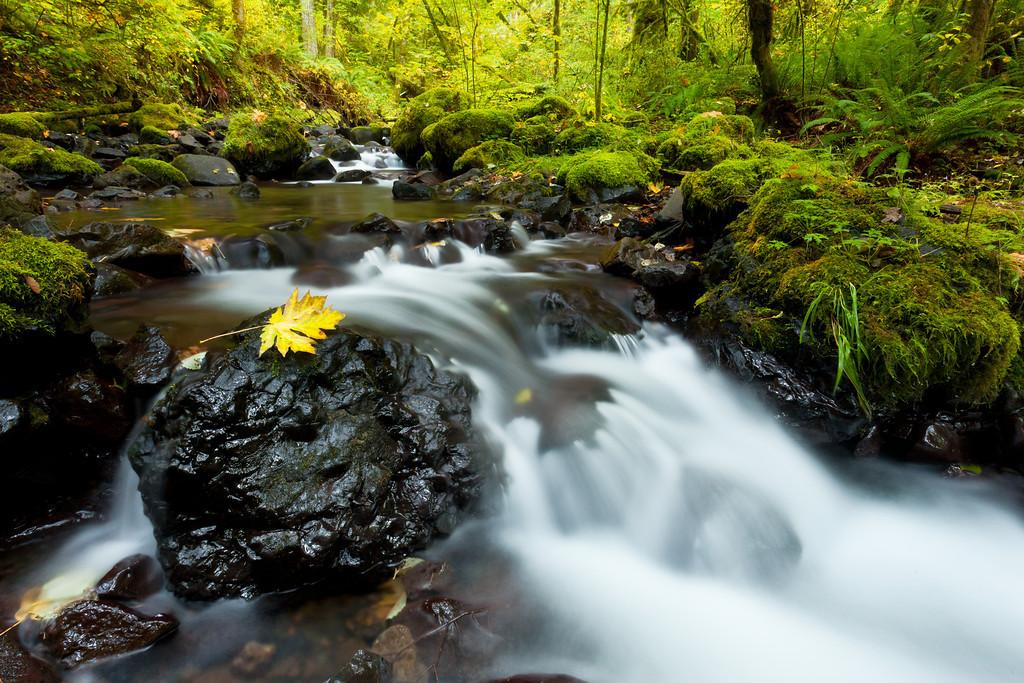 Gorton Creek