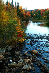 An Adirondack Stream in the Fall
