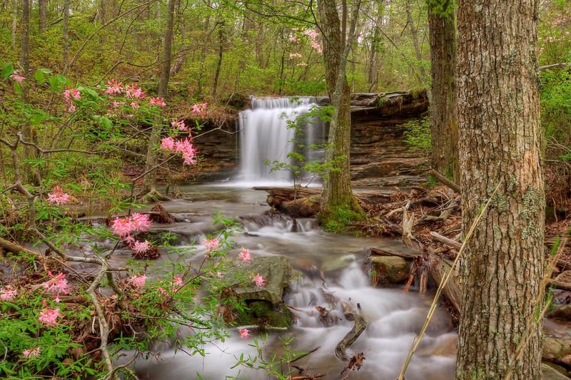 """""""Wild Azaleas & Waterfalls"""""""