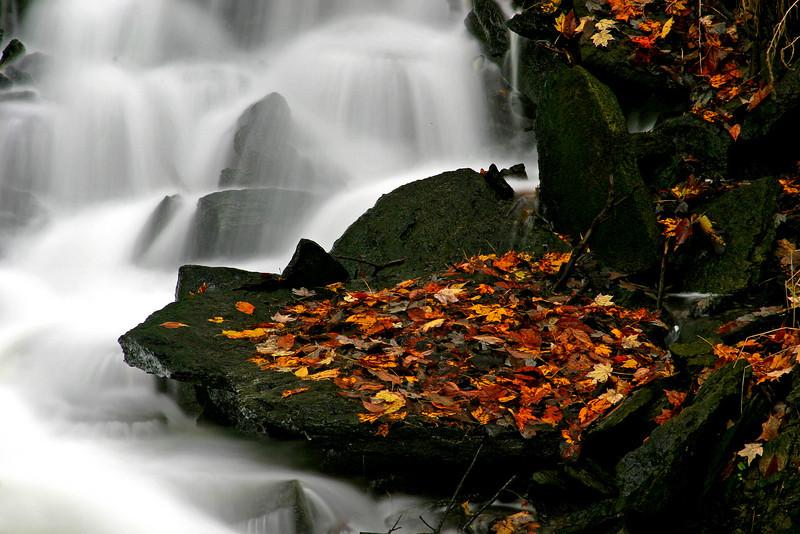 SF Rocks, Leaves, & Waterfall 1