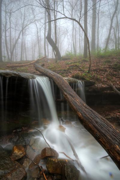 """""""Fallen Tree Falls"""""""