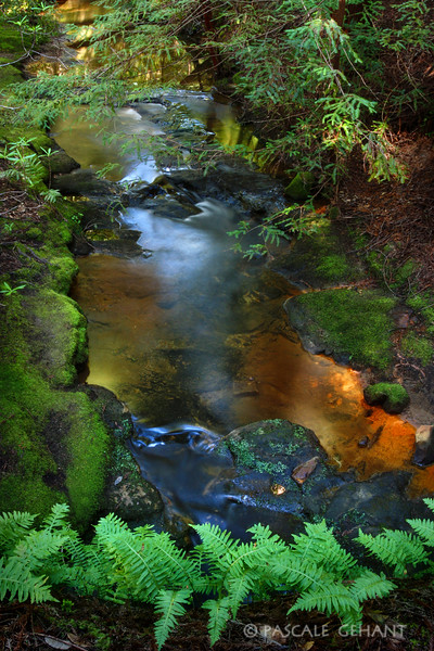 Mossy brook with ferns 2