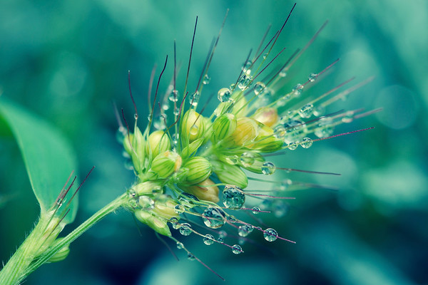 """""""Weeds are flowers too, once you get to know them."""" ~A.A. Milne"""