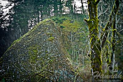 Hills around Latourell Falls Columbia River Gorge Scenic Area, Oregon, U.S.A.  © Copyright Hannah Pastrana Prieto