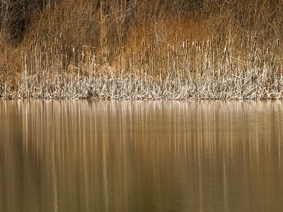Reeds & Reflections 01-2