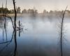 Foggy Pond 02-2-2