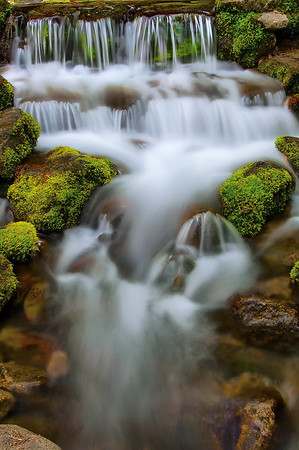 Fern Spring~Yosemite Valley