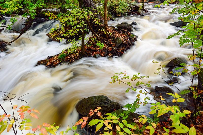 Miller Creek in Lincoln Park 02