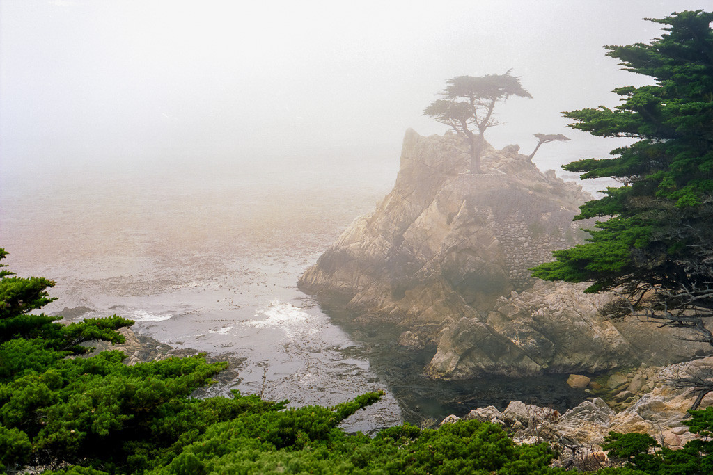 A foggy morning on the coast of the Pacific Ocean with Cypress trees