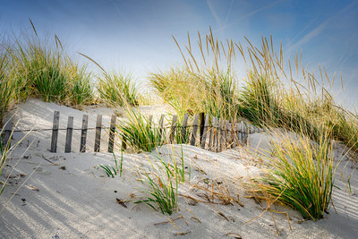 Beach Dunes, Sea Grass and Wooden Fence