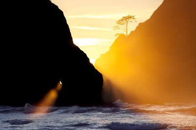 Ocean Rays