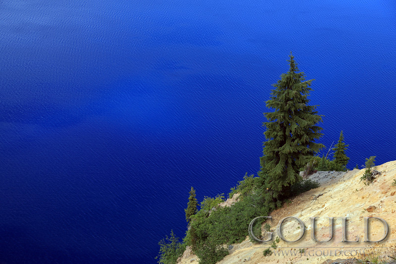 Crater Lake Tree