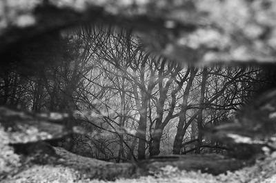 B&W Reflected Trees in Rock Puddle