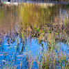 Wetland Reflection