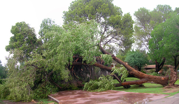 July 24, 2013 Meadowlark and Vista Del Monte - Saturating rains and a strong microburst uprooted or broke limbs on many trees in the area. Nikon Coolpix 4100 - 2 frame Pano