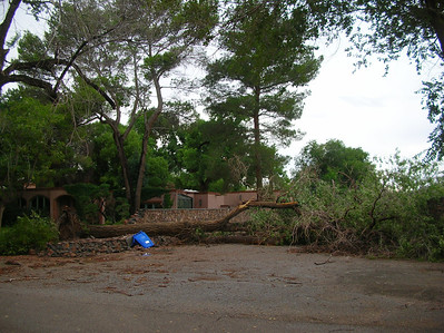 July 24, 2013 -Another Fallen tree along Vista Del Monte.  They're going to need a new recycle can. Nikon Coolpix 4100