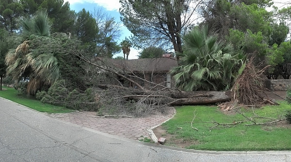 This is the house located directly behind my house - The back yard of this house is seen in the video. Motorola Droid Razr Maxx - Panorama mode.  This tree can be seen falling in the storm video, at the 11 second mark.