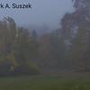 Foggy morning