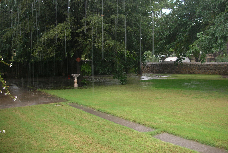 Pooling water in the backyard