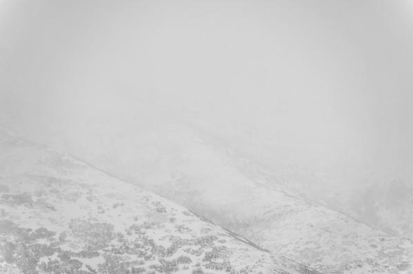 Winter Wears White
