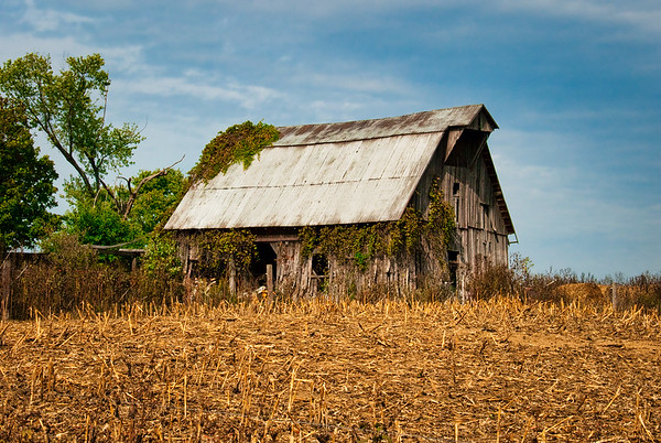 Barn and Vines