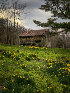 Barn and Spring Flowers
