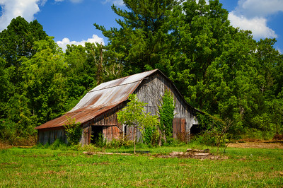 Weathered Barn and Vines
