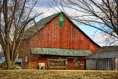 Red Barn and White Cow