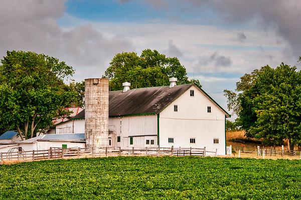 Evening Farm and Barn
