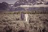 20190623WY_Lindsey Bennett_& Derek_McIlvaine_Wedding_&_Bride-Groom_Portrait_Session (160)-2