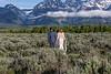 20190623WY_Lindsey Bennett_& Derek_McIlvaine_Wedding_&_Bride-Groom_Portrait_Session (160)