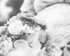 20180519WY_WEDDING_Laure_Minow_&_Buddy_Roswell (1650)moose-3
