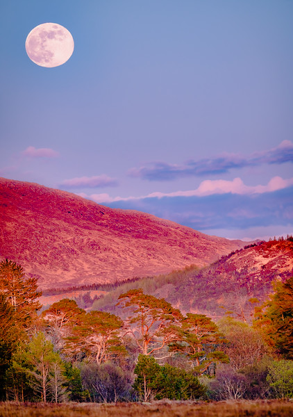 Pink Moon, Pink Landscape - Kentra Moss, Acharacle, Ardnamurchan