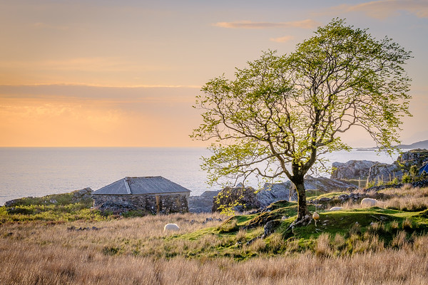 Spring Shieling - Smirisary, Glenuig, Moidart