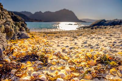 Seashells on the Sea Shore - Port Achadh an Aonaich, Smirisary, Moidart