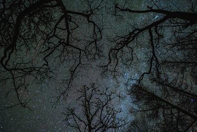 Winter Web - The Alphabet Trail, Salen, Ardnamurchan