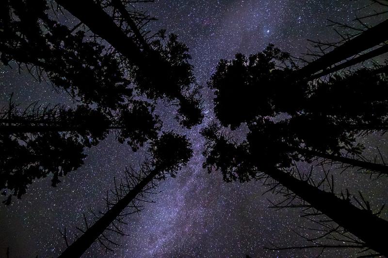 Reach For The Stars I - Sailean nan Cuileag, Salen, Ardnamurchan