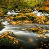 Autumn's Gold I - Allt na Meinne, Ariundle Oakwood, Strontian, Sunart