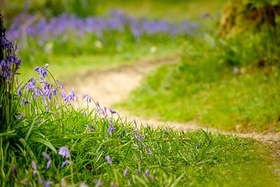 Winding Through Blue - Phemie's Walk, Strontian, Sunart