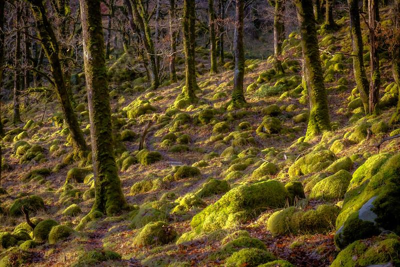 Fairy Hills - Ariundle Oakwood, Strontian, Sunart