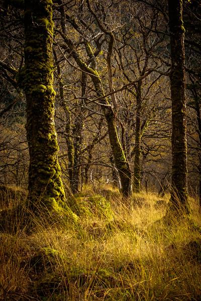 Sidelight II - Ariundle Oakwood, Strontian, Sunart