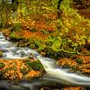 Autumn's Gold II - Allt na Meinne, Ariundle Oakwood, Strontian, Sunart