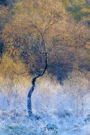 Cold Feet - Garbh Eilean Trail, Ardery, Sunart
