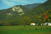 Seneca Rocks Farm