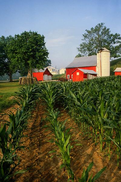 Wells Farm V1