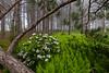 Ferns and Laurel 8854