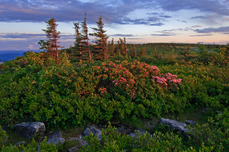Evening on Dolly Sods 50
